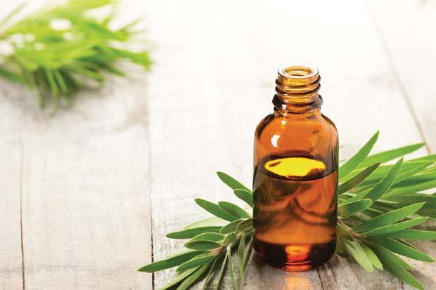 Tea Tree Oil Un Olio Tante Virtu